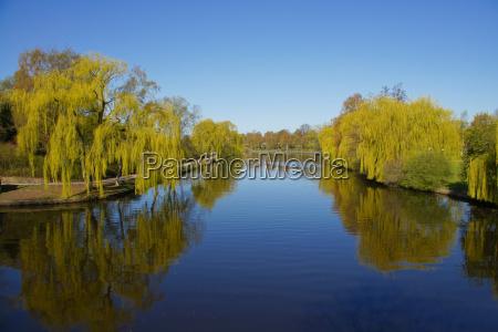 trae traeer spejling haengepilen flod vand
