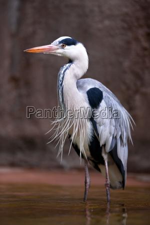 dyr fugl fugle hejre zoo zoologisk