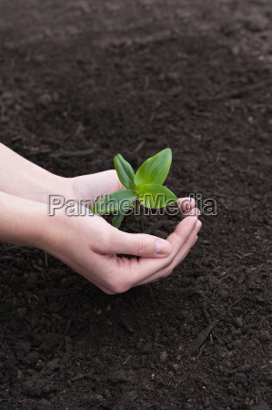 have kompost vaekst vokse haver muldlag