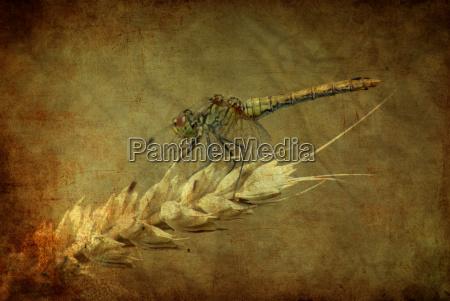 miljo plante dyr berlin vaterpas guldsmede