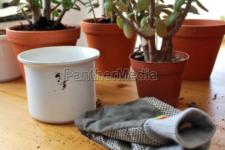 planter repot