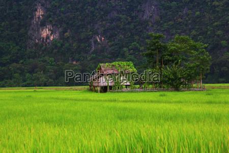 hus bygning mark rismarker stuehus ris