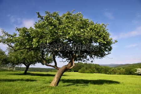 omstrejfende frugt eng om sommeren