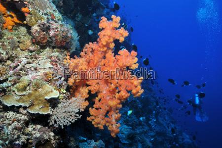 pa apo reef