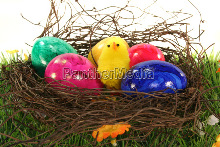 easter chick eggs easter eggs meadow