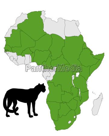cheetah forekomst afrika