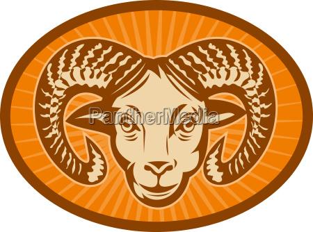 bighorn far eller ram