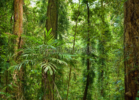 beautiful plants trees in rain forest