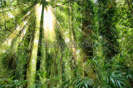 sollys, i, dorrigo, world, heritage, rainforest - 4344555