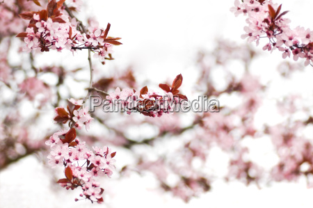 blomst plant plante blomstre blomstrende blomster
