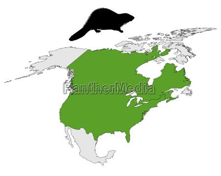 valgfri dyr pattedyr gron gront gronne