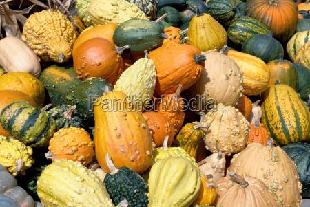 landbrug gronsager graeskar calabash host gul