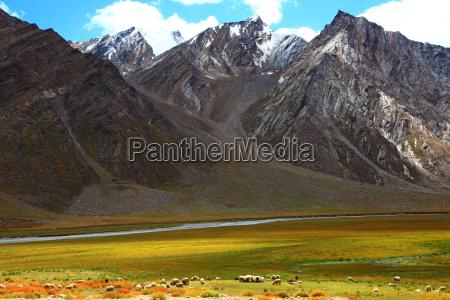 zanskar valleyindia