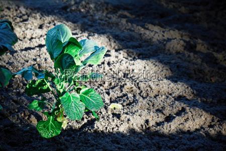 plante udendorsoptagelse horisontal mark vandret format