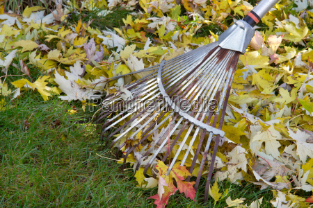 efterar blade rake i haven