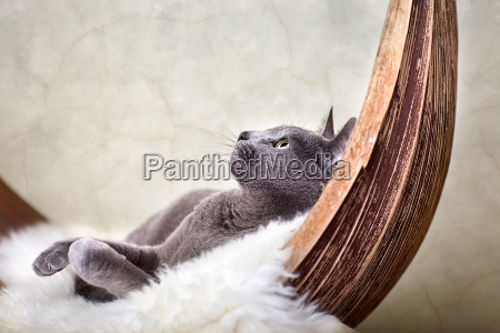 cat while relaxing