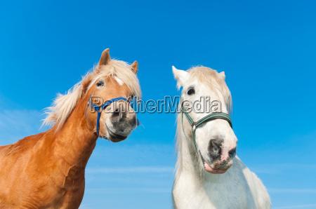 horses in meadow