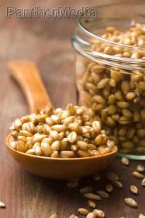 mad levnedsmiddel naeringsmiddel fodevare diaet hvede