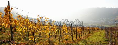dis vinbjerg mosel udsigt udsyn vue