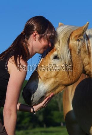 horse friezes in nature