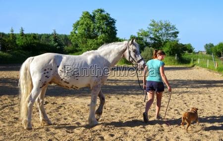 friendships in equestrian