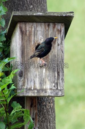 brut reden nesting fuglekasse fugl hus