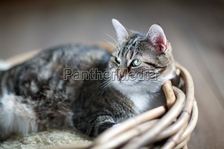 basket plaited braided wicker basket pussycat