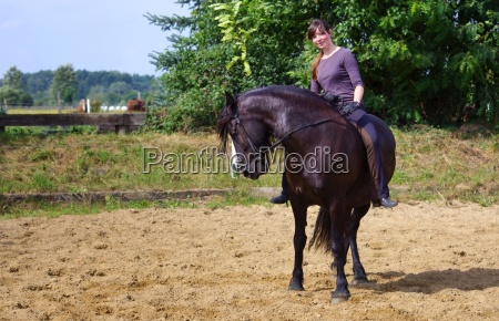 equitation on the friesen horse in