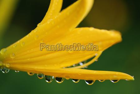 verde flor gotas de agua agua