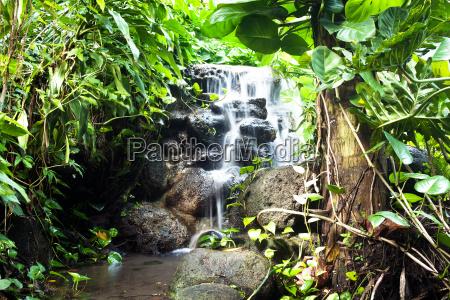vandfald landskab natur plante