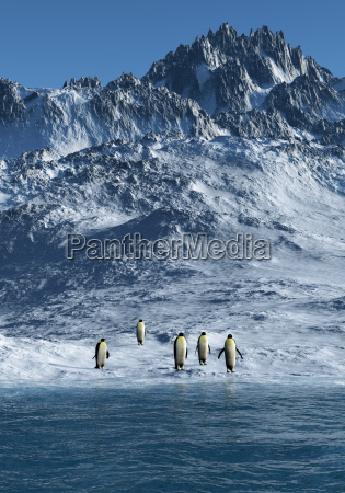 kejserpingviner