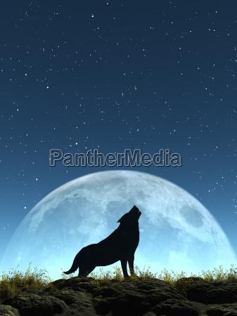 dyr pattedyr hyl hylende fuldmane ulv