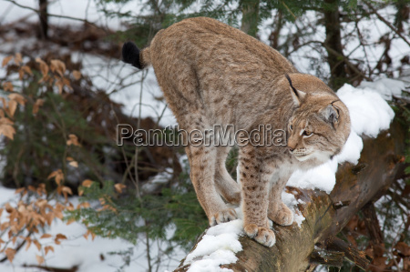 vinter dyr brun fauna kold koldt