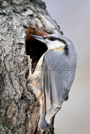 miljo fugl fugle forar var natur