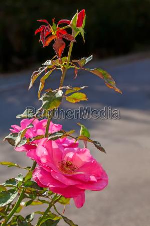 makrooptagelse close up naerbillede blomst plant