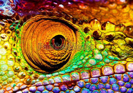 reptilian oje