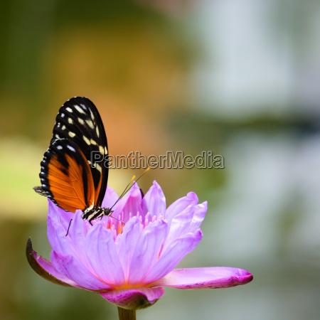 close up inseto borboleta tranqueilidade mariposa