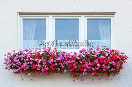 blomst vindue