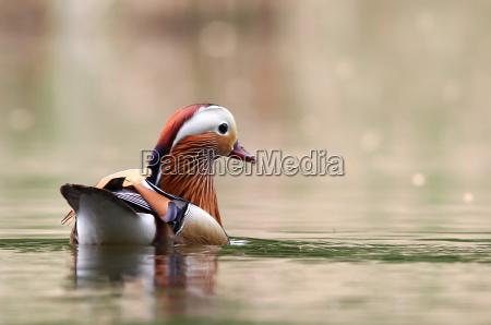 miljo dyr fugl fugle natur