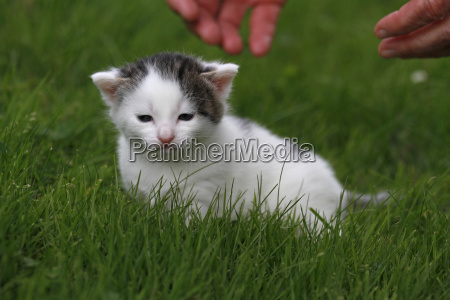 cats baby in the grass