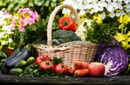 friske okologiske grontsager i haven