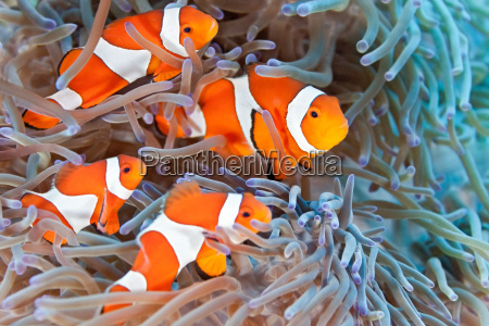 fisk undersoisk wildlife anemone hvid anemone
