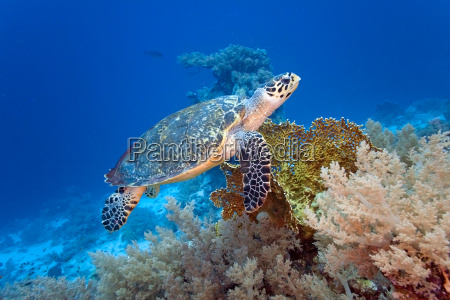 dyr vild vilde vildt fisk undersoisk