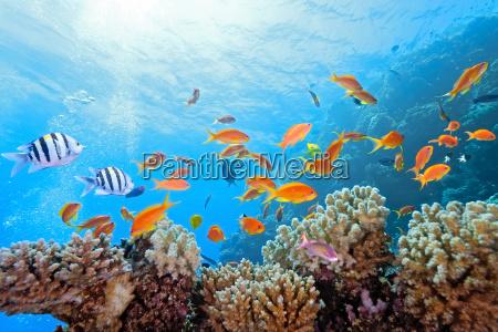 fisk refleksion undersoisk spejlbillede wildlife reef