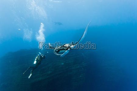 fisk lysstrale beam dykker natur