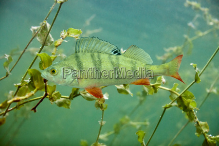 dyr fisk undersoisk wildlife rovdyr ferskvand