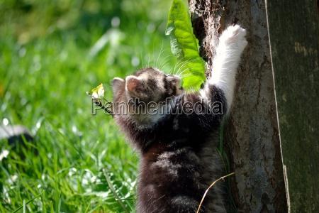 little kitten climbs