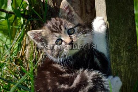 playful cub baby cat baby kitten