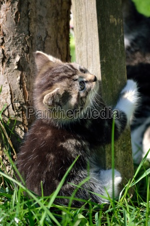 small playful cat