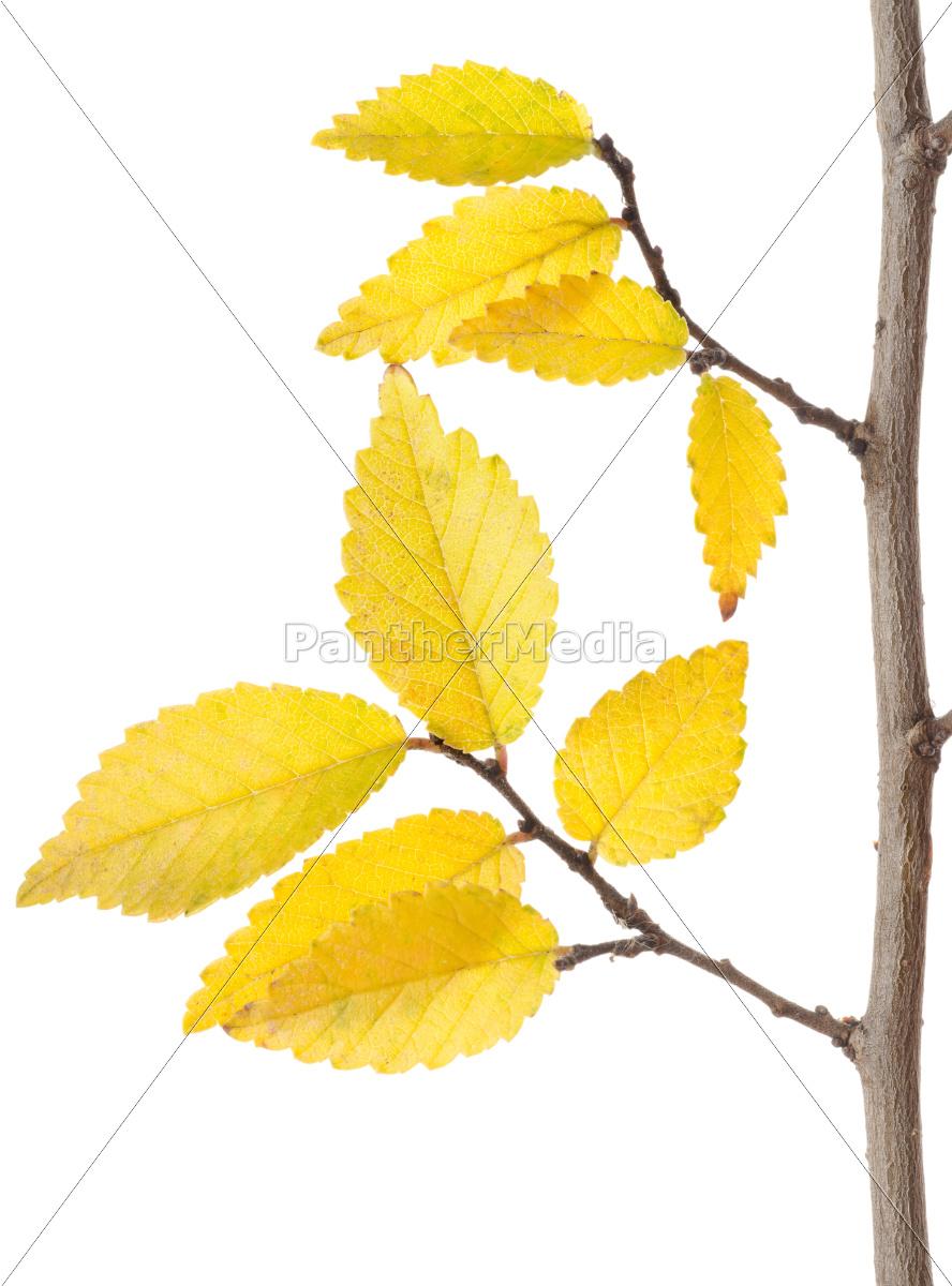 gul, efterår, branch - 10124877